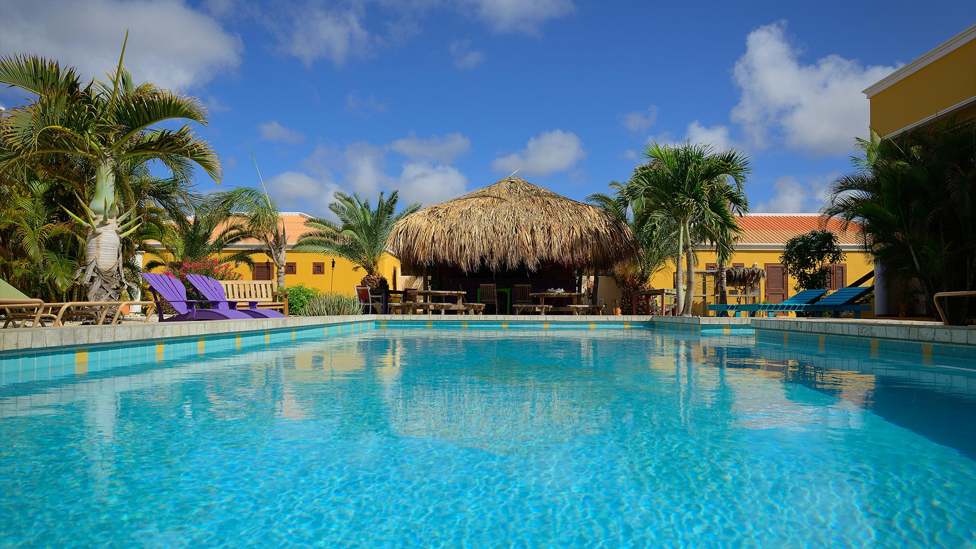 Djambo Bonaire - Swimming Pool